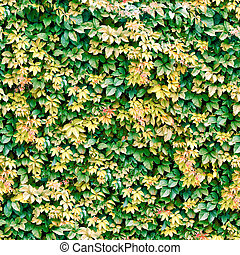 Vine seamless background. - Texture pattern for continuous...