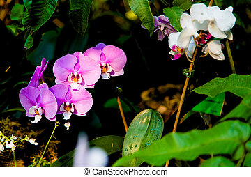 Beautiful exotic flowers in tropical jungle