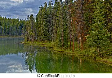 Reflection in Herbert Lake - Treeline reflection in Lake...