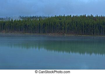 Treeline reflection in Herbert Lake, Banff National Park -...