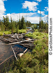Northern Saskatchewan Creek - Fallen trees in a Northern...
