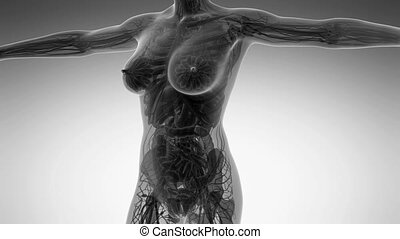 science anatomy of human body in x-ray with all organs