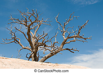 desert tree against clear blue sky