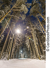 Winter forest covered with snow - Winter forest, road and...