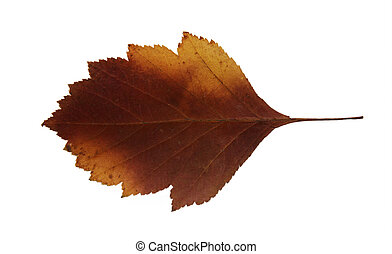 dried fall leaves of plants