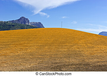Sloping Hills of Spain in the Autumn
