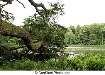 Glyme River, Woodstock, England - landscape