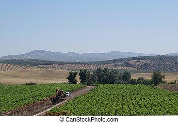 aéreo, vista, de, paisagem, Espanha,