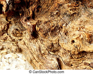 Gnarled wood - Gnarled surface of wood from a dead tree