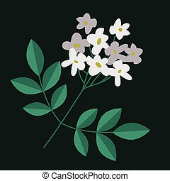 Flowering branch isolated