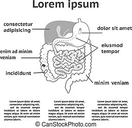 The human digestive system illustration