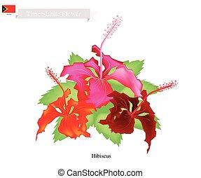 National Flower of Timor Leste, Hibiscus Flowers -...