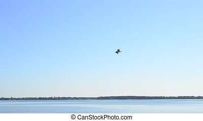 Seagull flies over water on background of sky