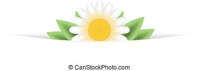 One daisy banner header background