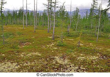 Mountain taiga Taimyr The Taimyr Peninsula, Putorana...