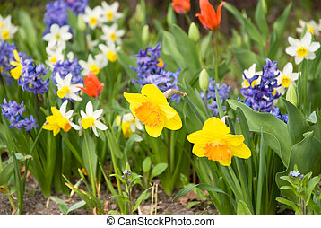 spring flowers - colorful part patch with spring flowers