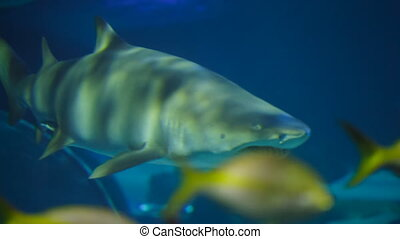 Shark in Aquarium - Sharks in Aquarium. Marine life