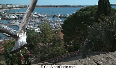 Seagull flies away. View at Cannes, Cote d'Azur, France