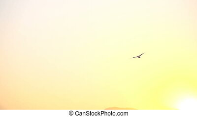 Seagull flying in the sunset sky - Seagull sitting on stone...
