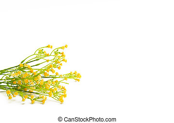 Yellow flowers isolated on white background Wildflowers