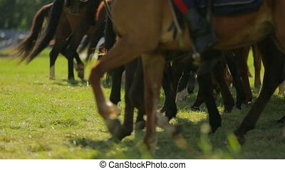 Line Of Brown Horses Walking In Circle - Waist down shot of...