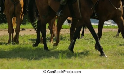 Brown Horses Walking On Green Meadow - Waist down shot of...