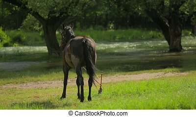 Horse On Leash Standing Near River