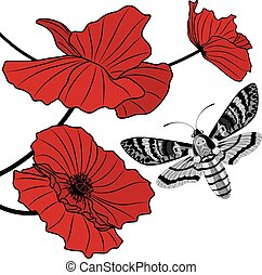 death's head hawk moth and red poppy - vector background...