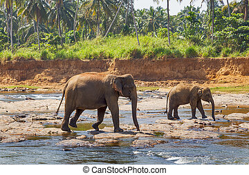 family Mother elephant with baby