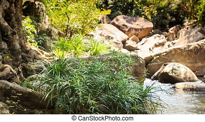 Bush by Small Rocky River Cascade with Waterfall - closeup...