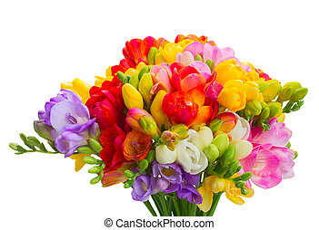Fresh freesia flowers - Bunch of Fresh freesia flowers close...