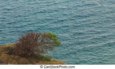 Closeup Bush on Beach Rock against Azure Sea - closeup view...