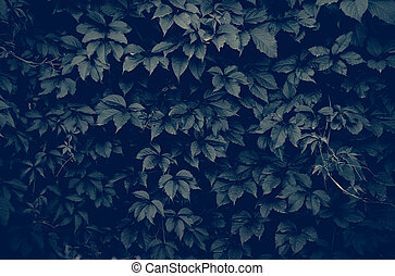 dark climbing plant - dark wall of climbing plant full...