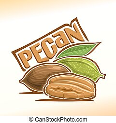 Vector illustration of pecan - Vector illustration on the...
