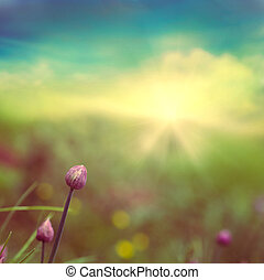 Chives - Fresh chives flower over colorful background Spring...