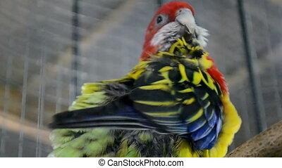 parrot on wooden perch closeup