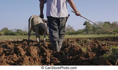 2-Man Farmer Working Ploughing The Soil With Ox - Farming...