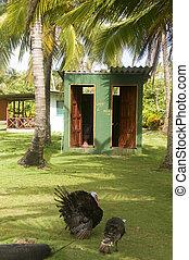 outdoor toilets big corn island farm nicaragua - outdoor...