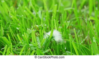 Hairy caterpillars - Large green hairy caterpillar crawling...
