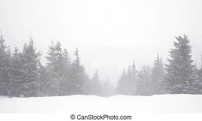 Christmas fir trees in snow winter wild forest snowing.