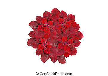 plant surface top view - Group red color plant surface top...