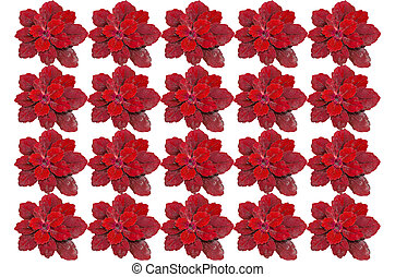 plant surface top view - Red color plant surface top view...