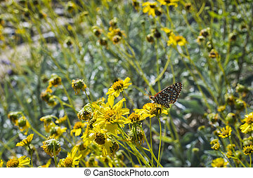 Butterfly on a Desert Plant - Desert Plant and Butterfly in...