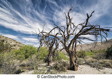 Landscape in the Anza-Borrego Desert - Tree in Anza-Borrego...