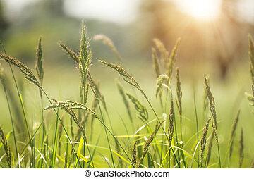 Green flower grass with sunlight.