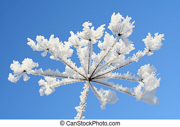 Ice flower - Ice covered flower with deep blue sky