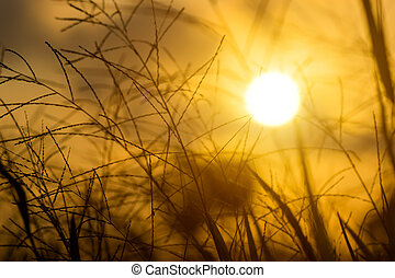 Flower grass and sunlight. - Silhouettes of Flower grass and...