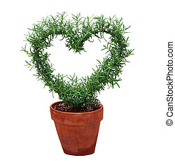Hearted Plant - Hearted shape plant in a pot isolated on...