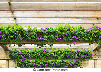Lantana Flower Pergola - Purple Hedge Flower, Weeping...