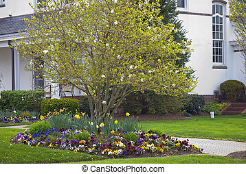 Home Spring Garden - A Spring garden surrounds this blooming...